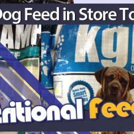 Healthy Dog Feed Now in Stock